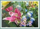 bannerwaxflower.jpg